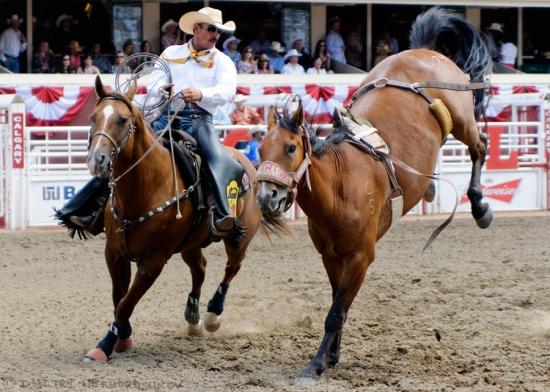 Rodeo Calgary Stampede 2012 187 Olya Krasavina Artist